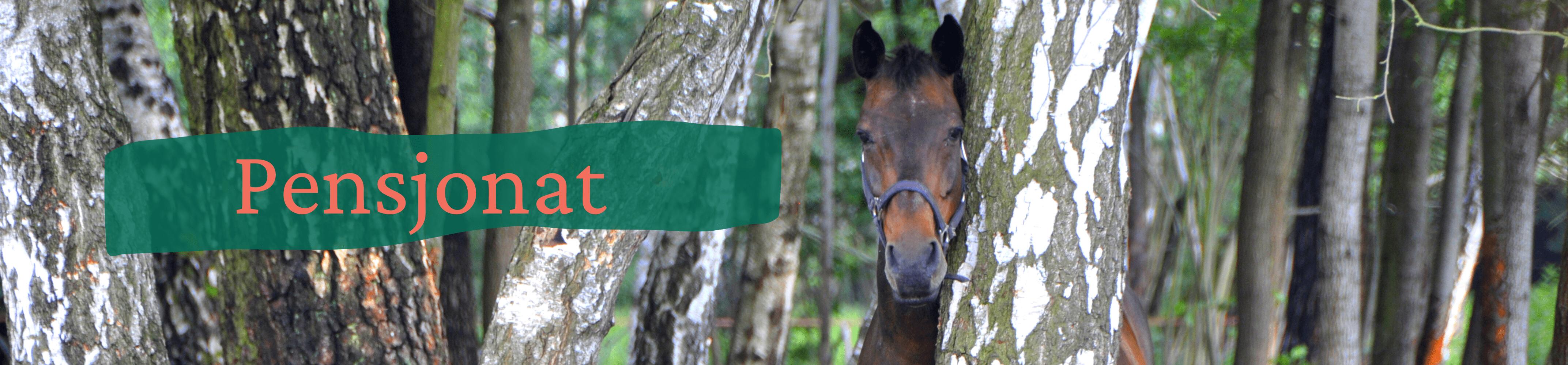 Portret gniadego konia stojącego za brzozą. Z lewej strony napis pensjonat
