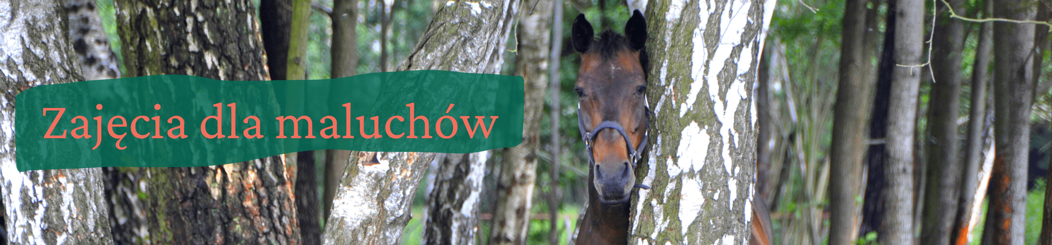 Portret gniadego konia stojącego za brzozą. Z lewej strony napis zajęcia dla maluchów