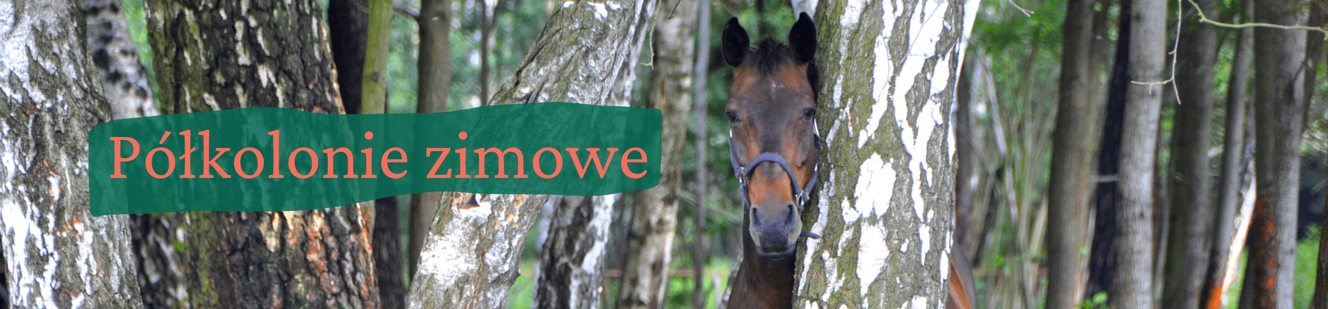 Portret gniadego konia stojącego za brzozą. Z lewej strony napis półkolonie zimowe