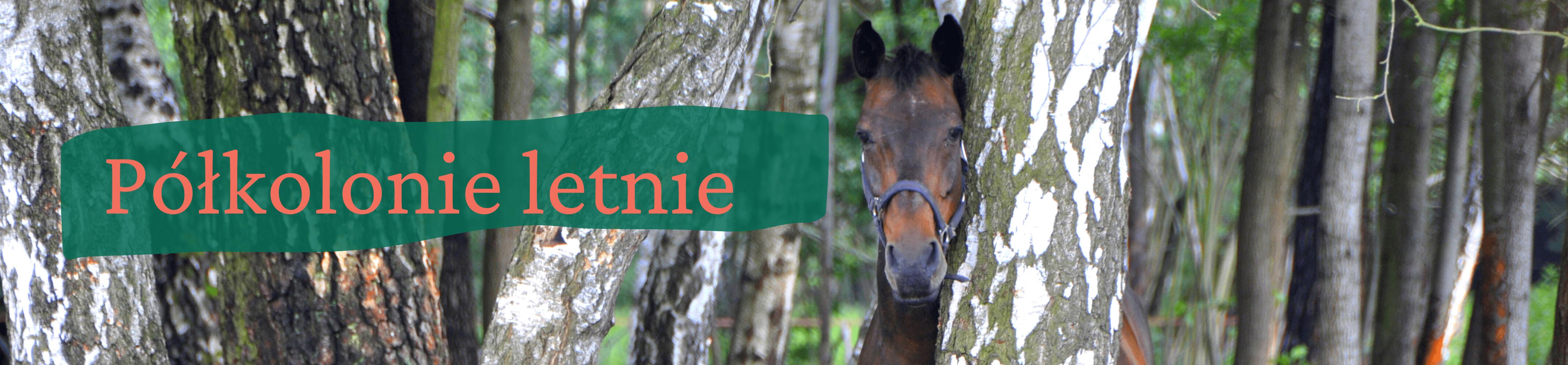 Portret gniadego konia stojącego za brzozą. Z lewej strony napis półkolonie letnie