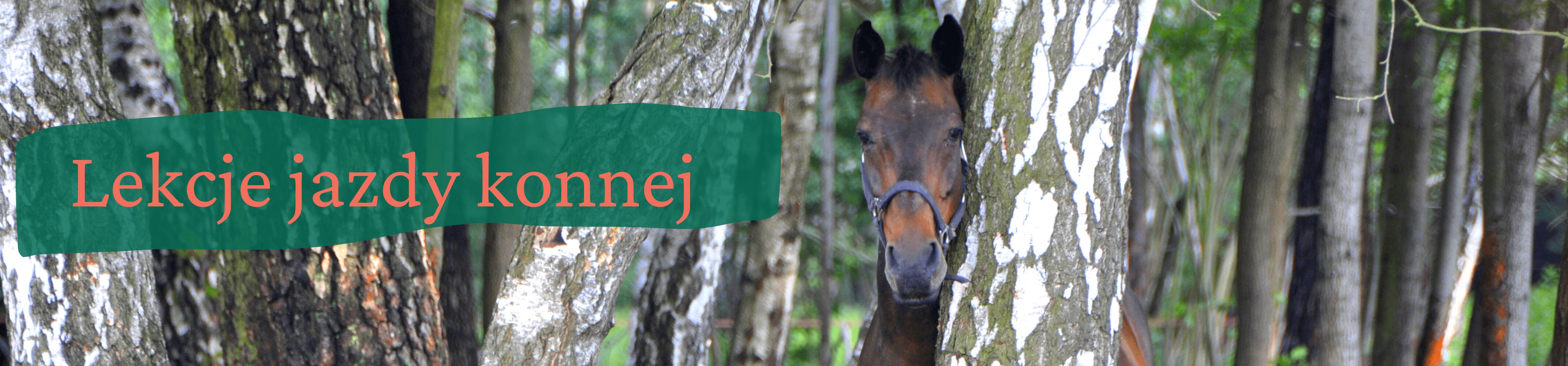 Portret gniadego konia stojącego za brzozą. Z lewej strony napis lekcje jazdy konnej
