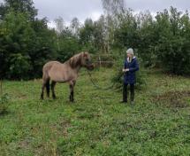Co robić, gdy koń wyprzedza