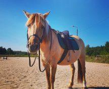 Jak dociągać popręg i nie drażnić konia